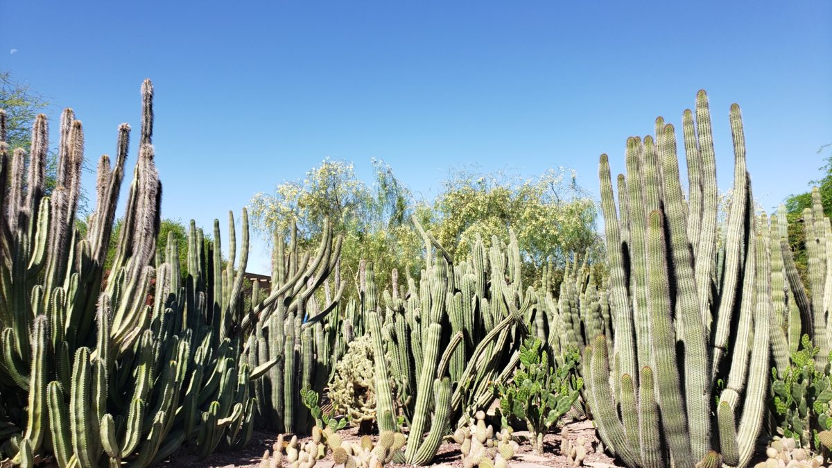 Visiting the Phoenix Desert Botanical Garden